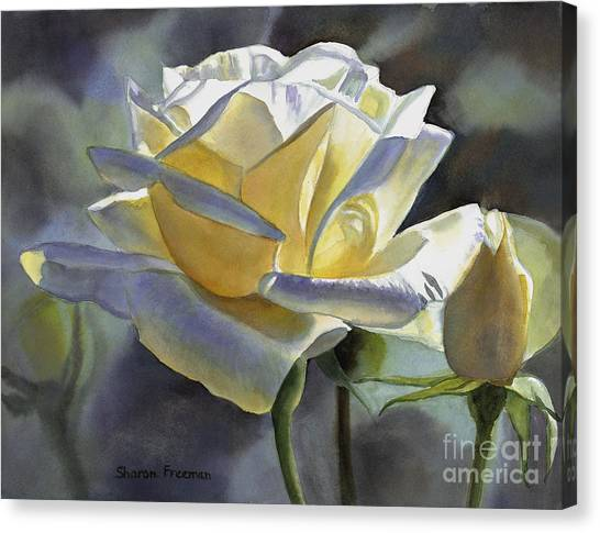 Rose Canvas Print - Hint Of Gold by Sharon Freeman