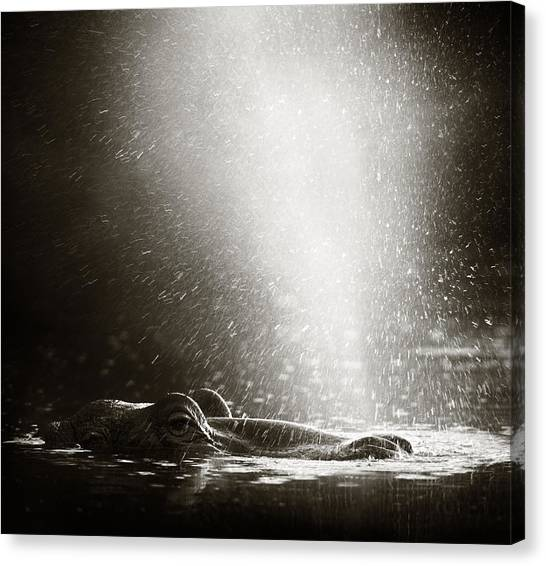 Hippos Canvas Print - Hippo Blowing  Air by Johan Swanepoel