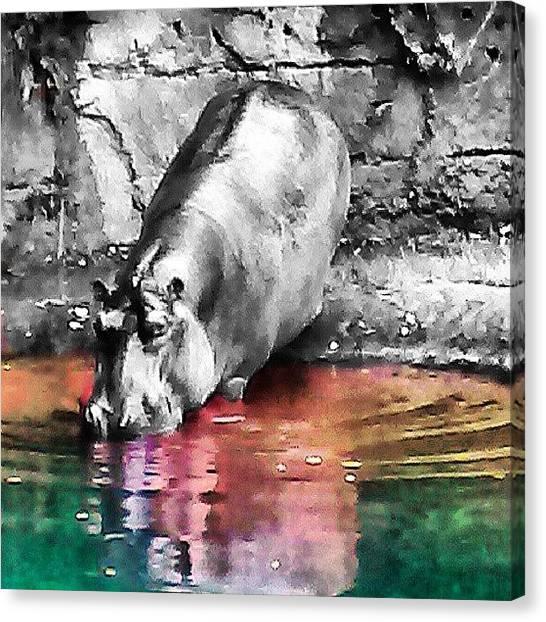 Hippos Canvas Print - #hippo, #hippopotamos, #rainbow by Melissa Hardecker