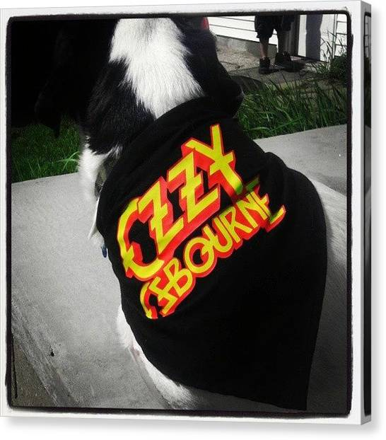 Rock And Roll Canvas Print - Crazy Train Pup by April Robertson