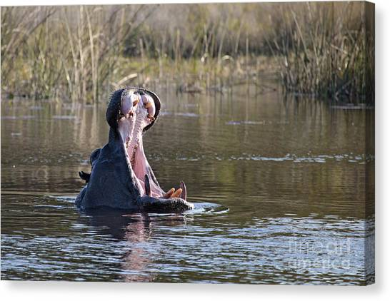 Hippo Yawning Canvas Print