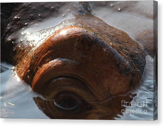 Congo River Canvas Print - Hippopotamus 7d27328 by Wingsdomain Art and Photography