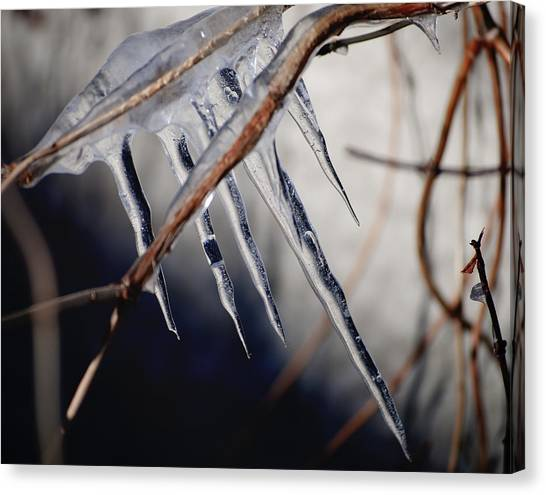 Snow Melt Canvas Print - His Biting Touch by Matthew Blum