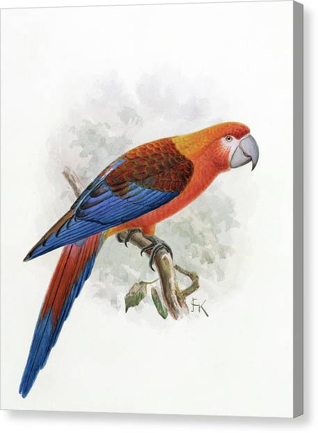 Macaw Canvas Print - Hispaniolan Macaw by Natural History Museum, London/science Photo Library