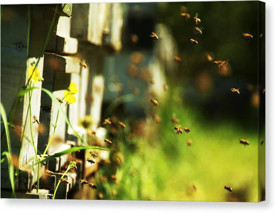 Hives And Bees Canvas Print