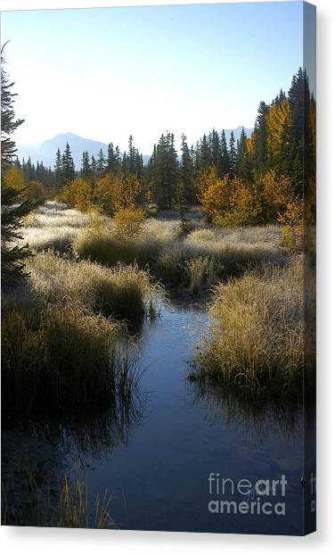 Hoar Frost And Stream Canvas Print