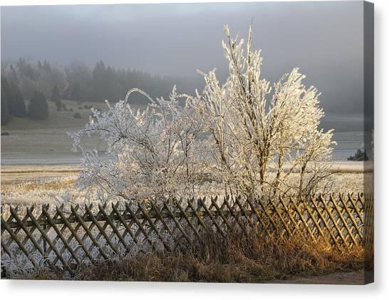 Baden Wuerttemberg Canvas Print - Hoarfrost In Winter by Matthias Hauser