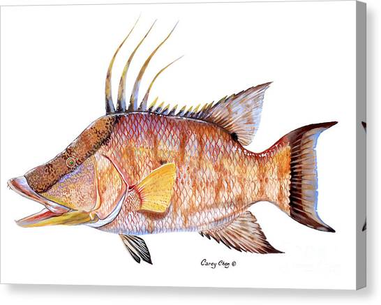 Spearfishing Canvas Print - Hog Fish by Carey Chen