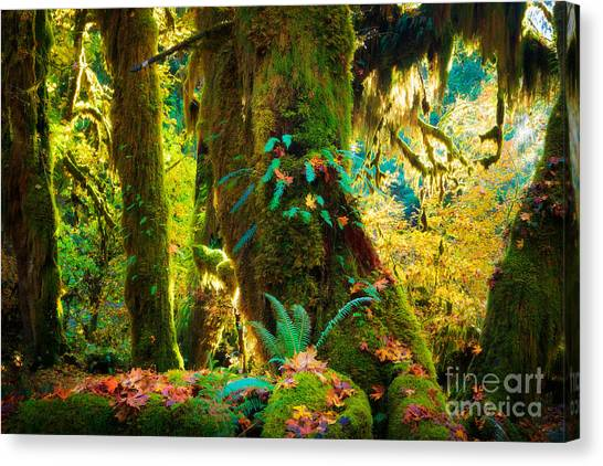 Olympic Peninsula Canvas Print - Hoh Grove by Inge Johnsson