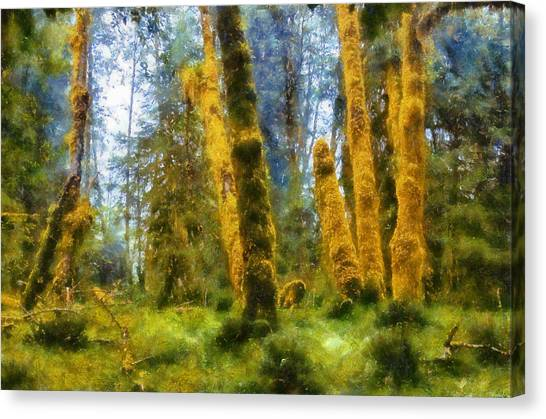Mossy Forest Canvas Print - Hoh Rain Forest by Kaylee Mason