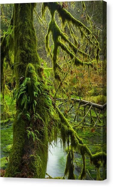 Hoh Rainforest 2 Canvas Print