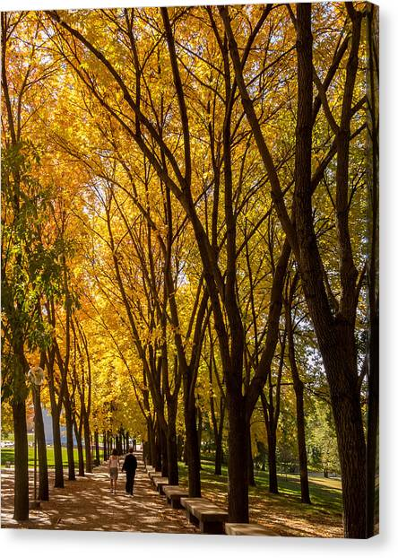 Canvas Print featuring the photograph Holding Hands Under Tree Canopy by David Coblitz