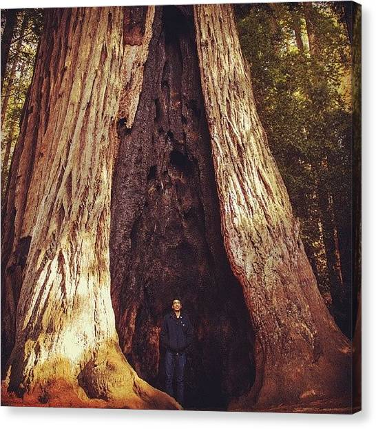 Redwood Forest Canvas Print - Hollow Heights #sanjose #hiking #trees by Steven Jacob