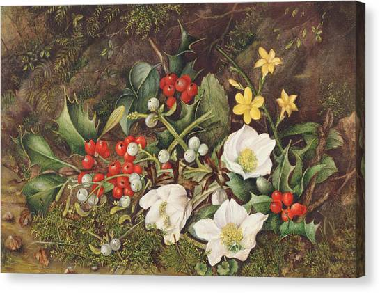 Mistletoe Canvas Print - Holly And Christmas Roses by Jane Taylor