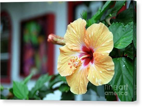 Holualoa Hibiscus Canvas Print