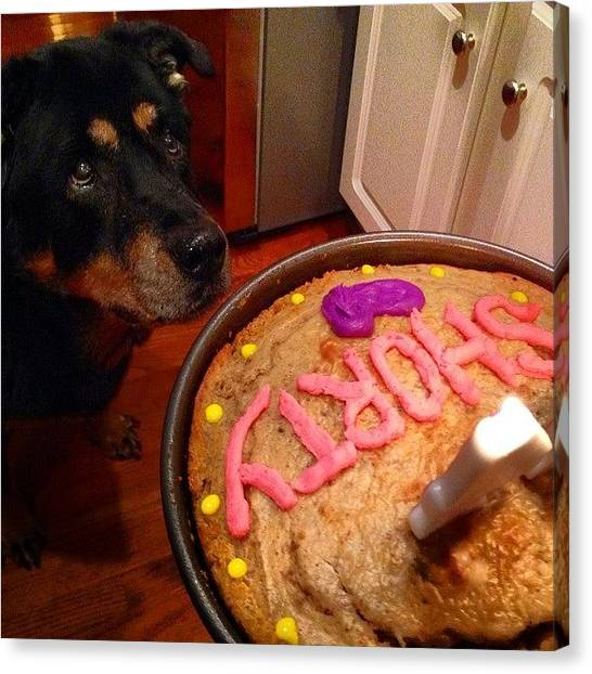 Rottweilers Canvas Print - Homemade Baked Dog Cake By by Brandon Salamone