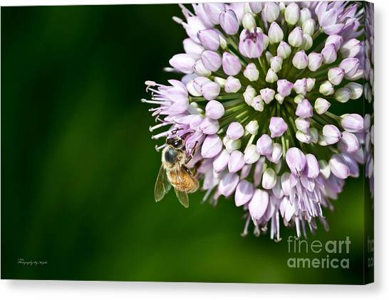 Honey Bee And Lavender Flower Canvas Print