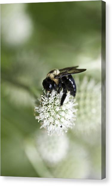Honey Bee At Work Canvas Print
