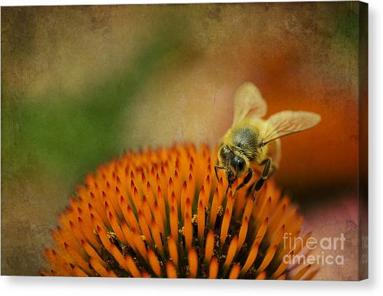 Canvas Print featuring the photograph Honey Bee On Flower by Dan Friend