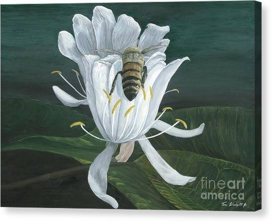 Honey Bee Canvas Print