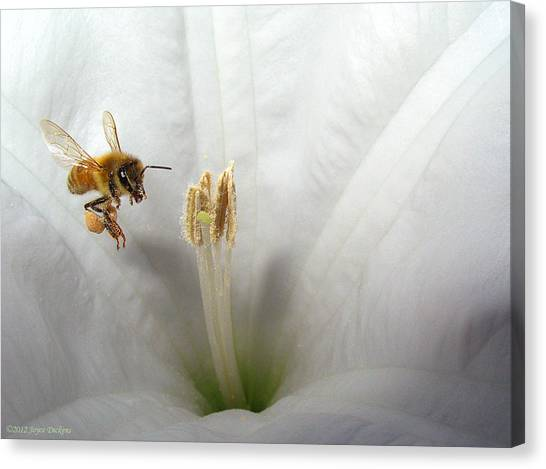 Honey Bee Up Close And Personal Canvas Print