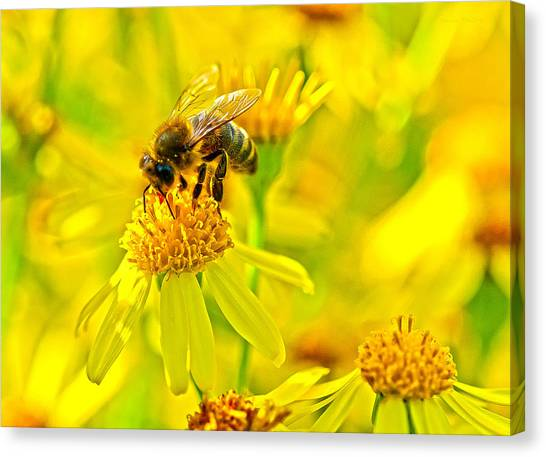 Honey Colours Canvas Print