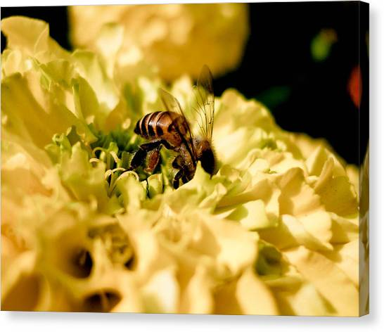 Honey Funny Canvas Print by Satyajit  Sil