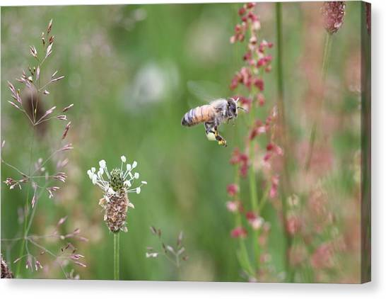 Honeybee Flying In A Meadow Canvas Print