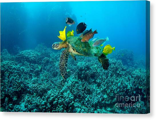 Honu Cleaning Station Canvas Print