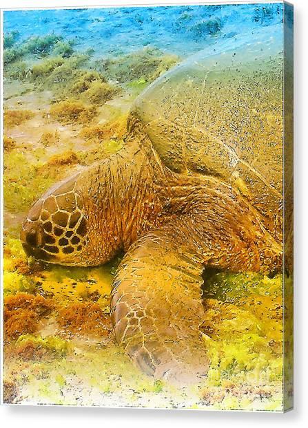 Honu  Sea Turtle Canvas Print