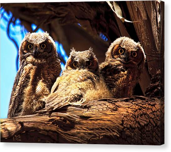 Hoo Are You Canvas Print