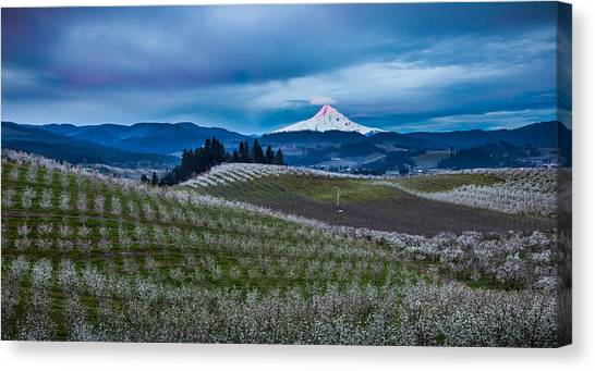 Fruit Trees Canvas Print - Hood River Orchard Sunrise by Thorsten Scheuermann