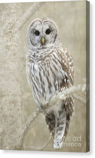 Hoot Hoot Hoot  Canvas Print