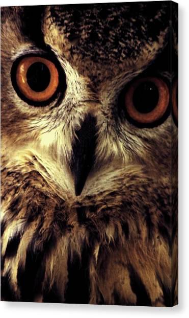 Hoot Owl Canvas Print by Alfredo Martinez