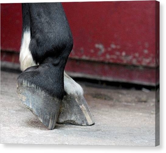 Hooves Canvas Print