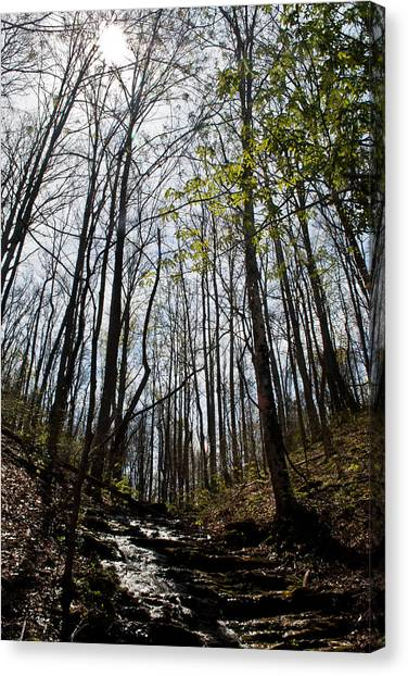 Hope In A  Mountain Stream Canvas Print