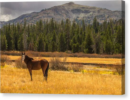 Hope Valley Horse Canvas Print
