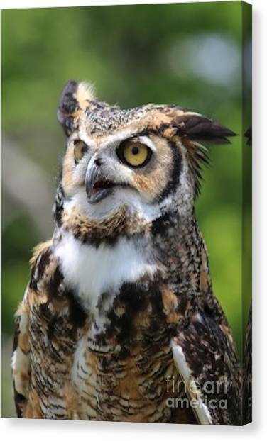 Preditory Canvas Print - Horned Owl by Joseph Marquis