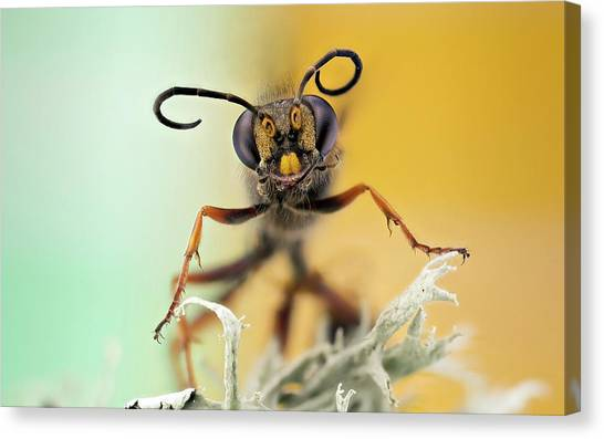 Wasp.insect Canvas Print - Hornet Head by Nicolas Reusens
