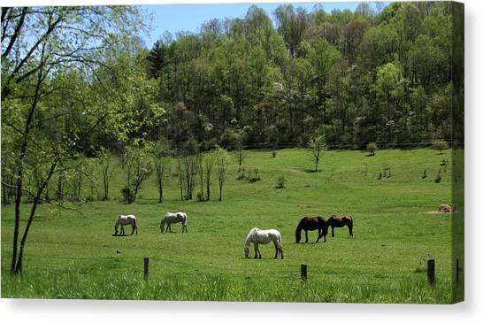 Horse 27 Canvas Print