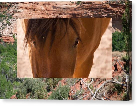 Horse And Canyon Canvas Print