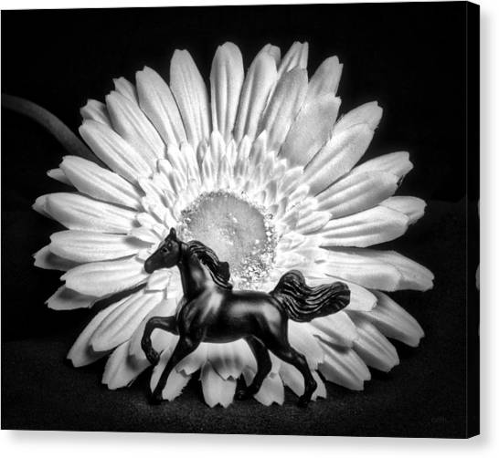 Horse And Daisy Canvas Print