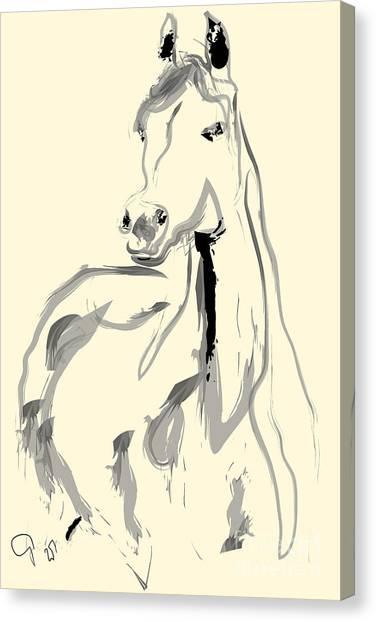Horse - Arab Canvas Print