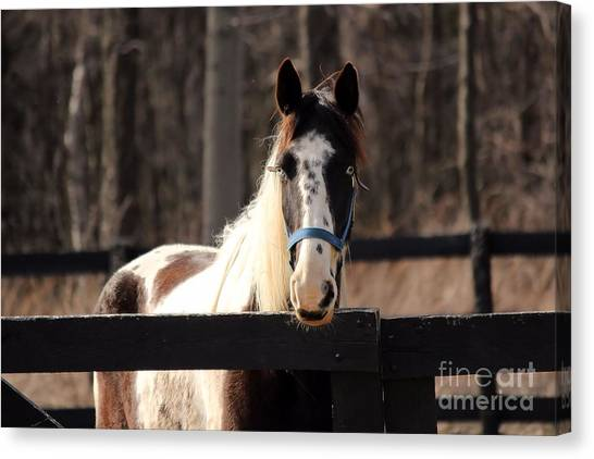 Horse At The Gate Canvas Print