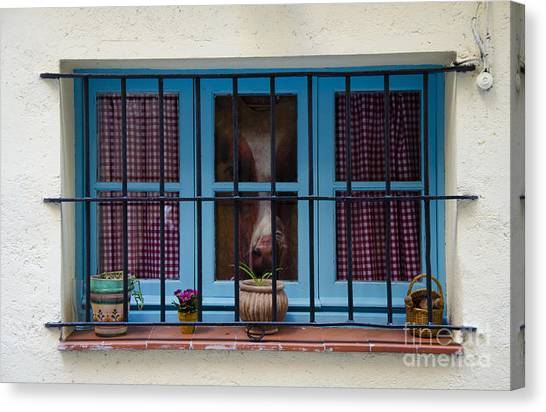 Funny Horses Canvas Print - Horse Behind The Window by Victoria Herrera