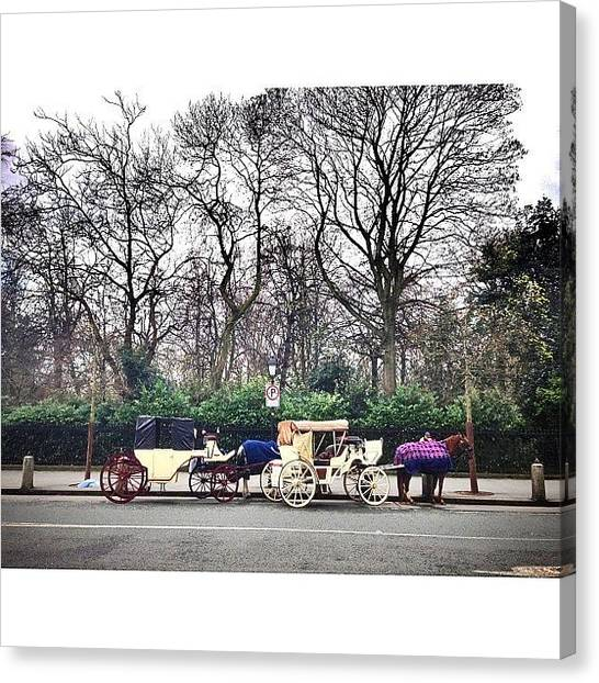 Street Scenes Canvas Print - #horse #carriage #park #saint #stephen by Luis Aviles