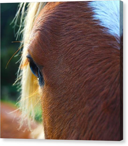 Canvas Print featuring the photograph Horse Close Up by Jocelyn Friis