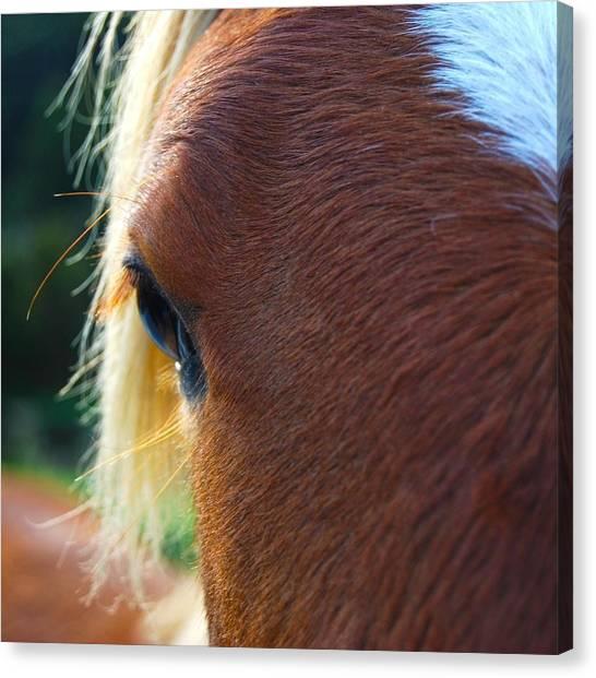 Horse Close Up Canvas Print