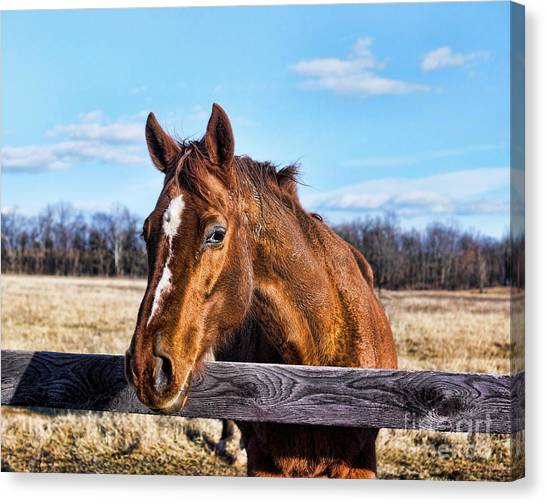 Horse Country Canvas Print