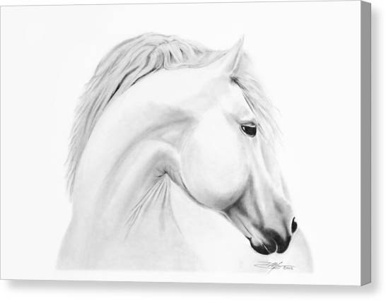 Horse Canvas Print by Don Medina